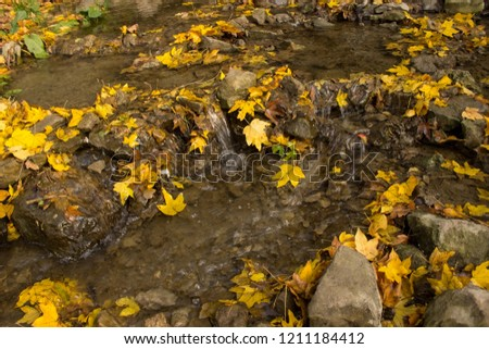 Autumn leaves on the water. #1211184412
