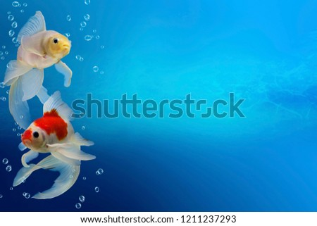 Collage with aquarium goldfish on turquose background with copyspace, fish tank with decorative carassius gibelio forma auratus, underwater scene with two colorful fishes and bubbles