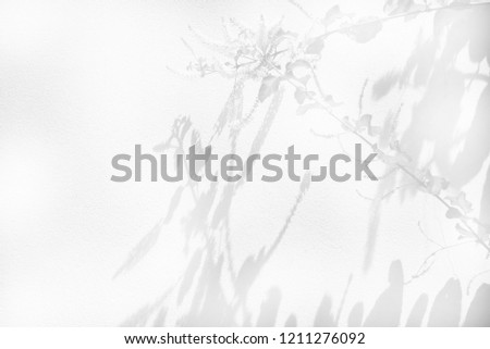 shadow of leaves tree on white background #1211276092