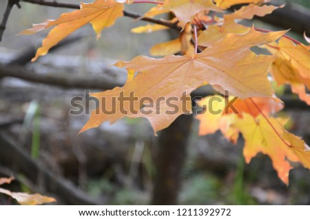 Autumn. Fall scene. Beautiful Autumnal park. Beauty nature scene. Autumn landscape, Trees and Leaves, foggy forest in Sunlight Rays #1211392972