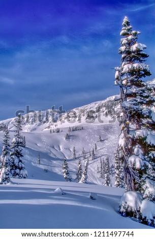 Back bowl at Whistler ski resort #1211497744