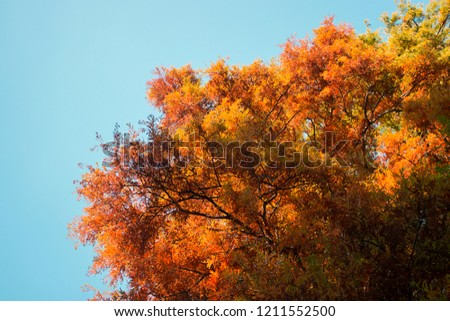 Top of a beautiful tree in autumn time #1211552500