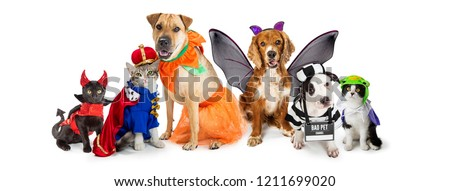 Row of dogs and cats together wearing cute Halloween costumes. Web banner or social media header on white.  Royalty-Free Stock Photo #1211699020