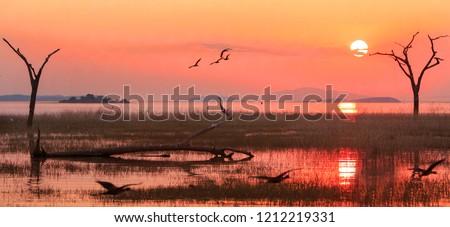 Panorama of a sunset over Lake Kariba with a silhouette of a Grey Heron and Egyptian Geese in flight.  Matusadona NationalPark, Zimbabwe #1212219331