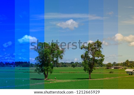 White Balance changes of field views
