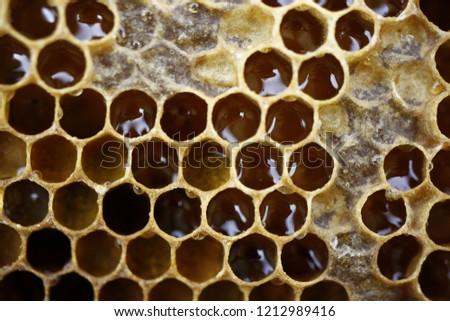 beekeeping hexagon bee hive  egg-laying #1212989416