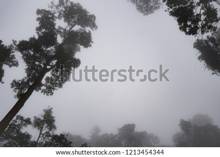 Rain forest,Autumn forest with misty.There is copy space in the middle of picture