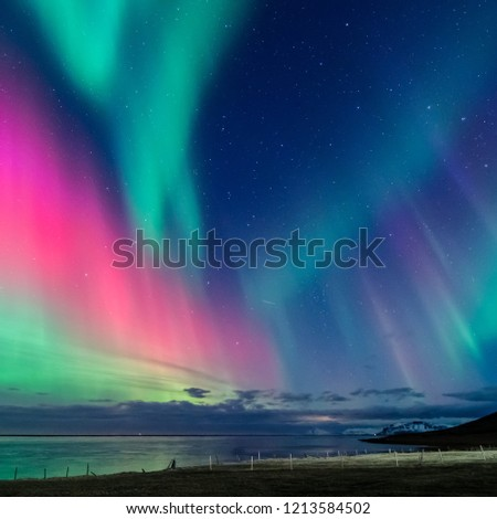 colorful northern light aurora borealis with purple, red, green and blu flames over the sky in iceland  in a beach  #1213584502