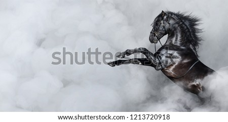 Black Spanish horse rearing in light smoke. Horizontal photo with space for text. #1213720918