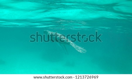 Hol Chan Marine Reserve, Manatee, Caye Caulker, Belize Royalty-Free Stock Photo #1213726969