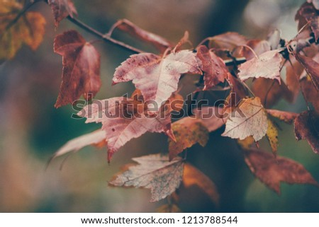 Autumn Leaves Background #1213788544
