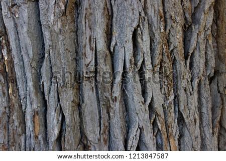 The bark of an old tree.Macro.   Russia. #1213847587