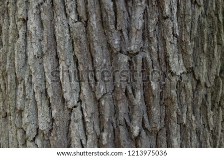 Patterns and designs of the bark of the tree. #1213975036