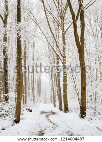 Park, edge of snowy forest. Snow white blanket and white sky. #1214004487