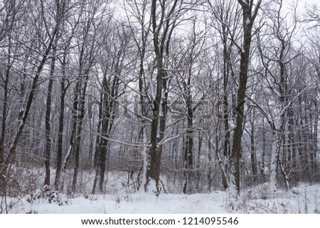 Carpathian forest. Zakarpattya, Ukraine. #1214095546