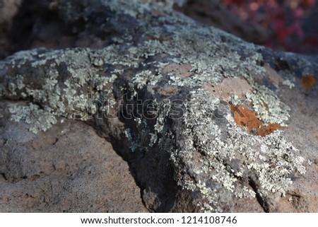 Lichen on a rock #1214108746