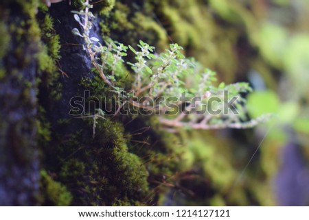 Nature at Wayanad #1214127121