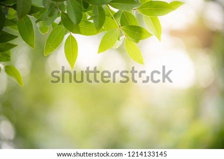 Closeup nature view of green leaf on blurred greenery background in garden with copy space using as background natural green plants landscape, ecology, fresh wallpaper concept. #1214133145