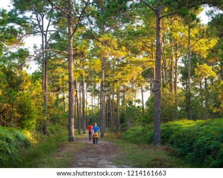 trekking Trail in Phu kradueng National park ,Loei , Thailand. #1214161663