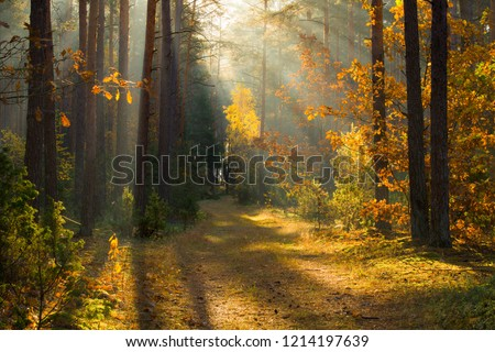 Autumn. Autumn forest. Forest with sunlight. Path in forest through trees with vivid colorful leaves. Beautiful fall background. Fall scenery. Fall wonderland. #1214197639