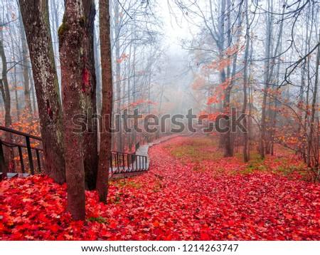 Red autumn forest mist stairway landscape. Autumn red forest stairway view. Forest mist stairway in red autumn season. Red autumn forest mist stairway panorama #1214263747