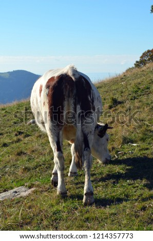 Cows in the black forest #1214357773