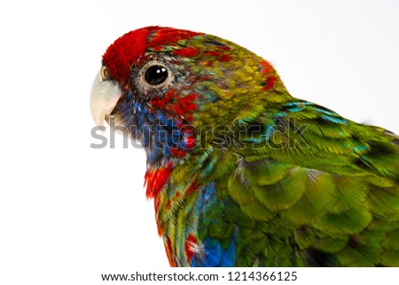 Parrot Parakeet colorful in Studio #1214366125