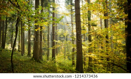 German Forest in Fall #1214373436