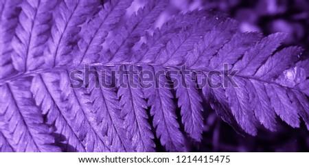 Purple colored fern plant #1214415475