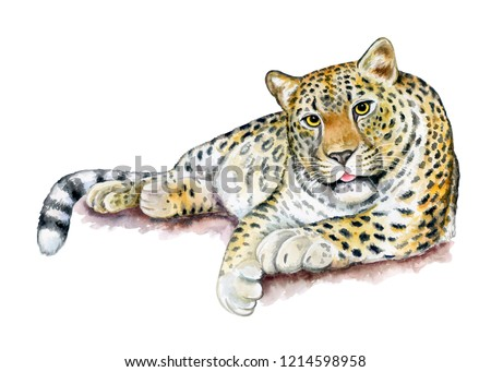 Leopard sitting. Big cat resting on a branch isolated on white background. Realistic watercolor. Illustrated. Template. Clip art. Close-up.