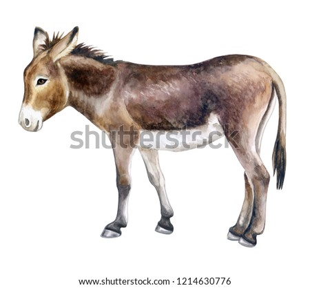 Donkey colorful isolated on white background. Watercolor. Illustration. Template. Close-up.Clip art. Hand drawn.