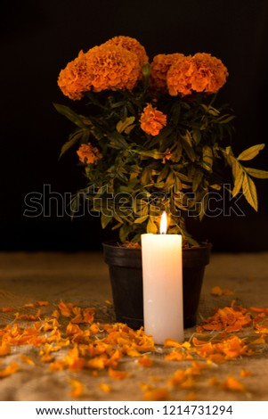 pot of cempasuchil flower and candle lit opposite. watery petals #1214731294
