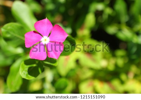 pink flowers, background blurred #1215151090