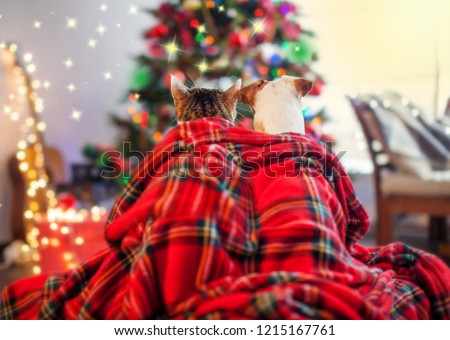 Cat and dog under a christmas tree. Pets sitting backs and looking at the Christmas tree