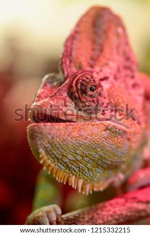Chameleon changing color #1215332215
