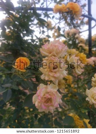 Beautiful Nature Gardens. #1215651892