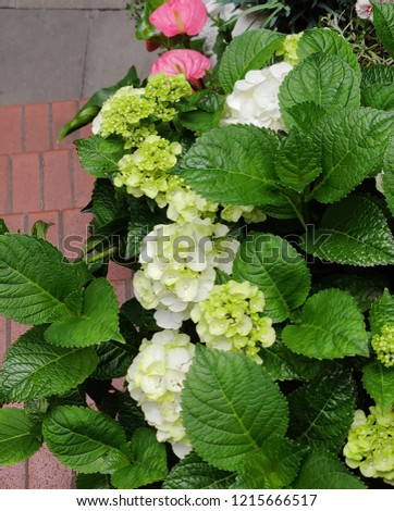 A bunch of flowers blooming in summer #1215666517