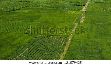 high angle view of large green farm land in China. #121579435