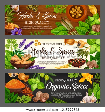 Spices, herbs and vegetable greens, food seasonings, condiments. Vector parsley, mint and garlic, pepper and basil, vanilla flower and ginger, oregano, saffron and turmeric, cardamom and nutmeg #1215999343