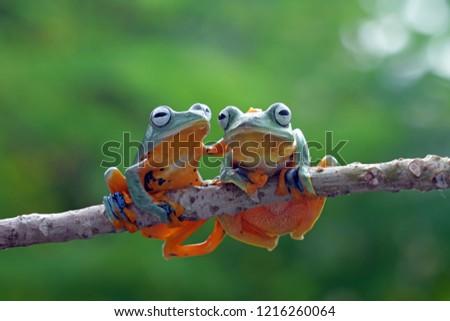 tree frog friendship  #1216260064
