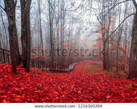 Red autumn mist forest stair way landscape. Autumn forest mist stairway view.  Forest mist stair way in red autumn season. Red autumn fog forest stairway panorama #1216360384