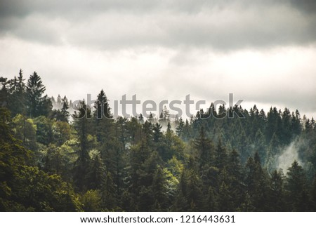 Mist, Fog in trees. Misty, foggy spruce trees in Romania. Moody picture in the mountains. #1216443631