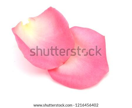 two pink rose petals #1216456402