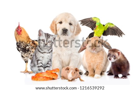 Group of pets together in front view. Isolated on white background Royalty-Free Stock Photo #1216539292