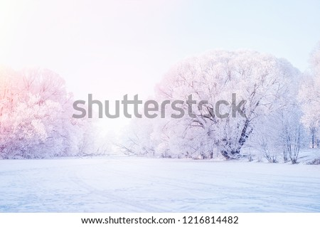 Winter Christmas picturesque background with copy space. Snowy landscape with trees covered with snow, outdoors Royalty-Free Stock Photo #1216814482