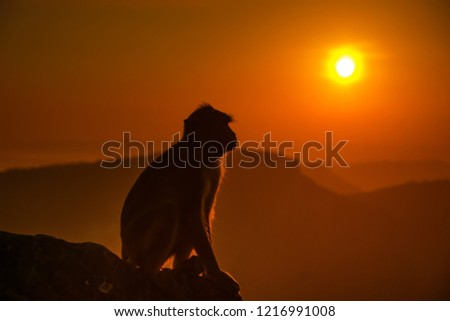 silhouette sunrise sky with monkey in nature. #1216991008
