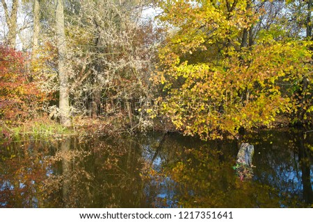 View on autumn landscape of river and trees in sunny day. Rural landscape. #1217351641