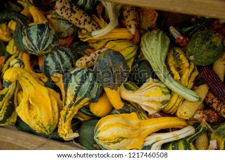 A variety of colored decorative pumpkins at the market place. Close-up. #1217460508