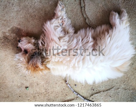 countryside dog in outdoor #1217463865