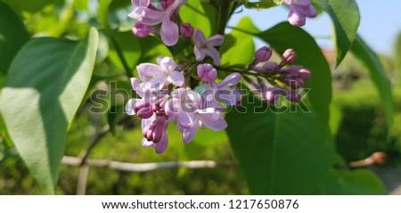 Flower Background  #1217650876